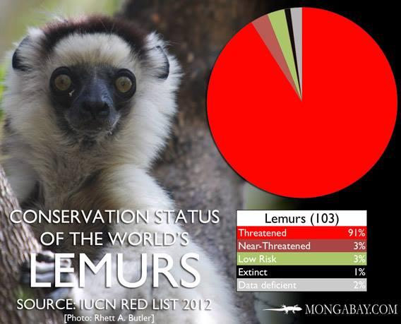 Lemur conservation status