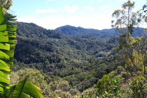 Photo taken from the viewing platform, showing the forest of Ranomafana